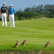 Campo Olímpico de Golfe recebe prêmio da principal...